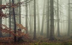 The Sound of Silence (Netsrak) Tags: baum bäume eu eifel europa europe forst landschaft natur nebel rheinland rhineland wald fog forest mist nature trees winter woods outside