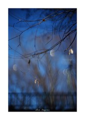 2019/2/2 - 9/15 photo by shin ikegami. - SONY ILCE‑7M2 / Lomography New Jupiter 3+ 1.5/50 L39/M (shin ikegami) Tags: asia sony ilce7m2 sonyilce7m2 a7ii 50mm lomography lomoartlens newjupiter3 tokyo sonycamera photo photographer 単焦点 iso800 ndfilter light shadow 自然 nature 玉ボケ bokeh depthoffield naturephotography art photography japan earth