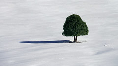 Lone Tree (Star Wizard) Tags: kemmerer wyoming unitedstates us