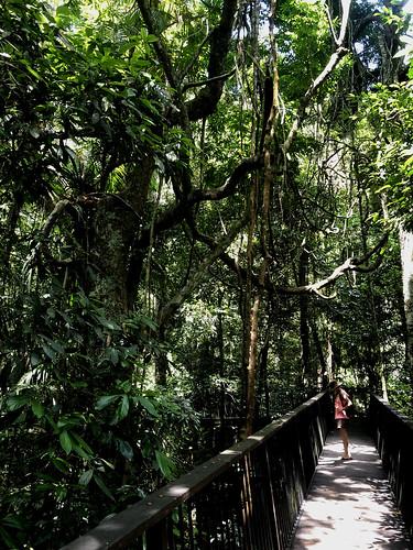 IMG_0743 Jungle Walk in the Rainforest