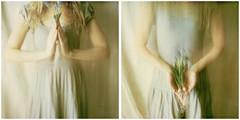 An invincible spring (l'imagerie poétique) Tags: polaroid 1212project renaissance rebirth conceptualphotography visualmetaphor diptych