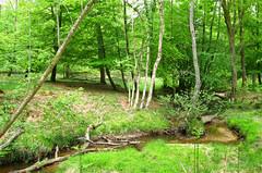 New Forest NP, Hampshire, UK (east med wanderer) Tags: england hampshire uk newforestnationalpark nationalpark forest woodland stream oak beech bracken green