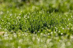 GREEN (explored 04/09/2019) (Lynn Tweedie) Tags: grass bokeh 7dmarkii missouri sigma150600mmf563dgoshsm green canon ngc eos