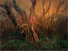 Everything passes, everything changes ... (Jan 130) Tags: jan130 happy2019 tree plants responsibility change wilderness texture topaz picmonkey newhallvalley plantsbrook westmidlands england uk ngc npc