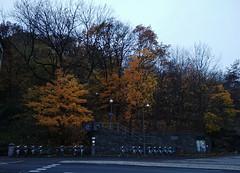 The last of the autumn (Elmar Eye) Tags: autumn gothenburg foliage