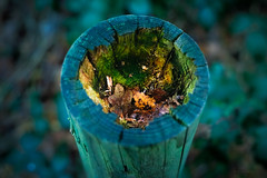 in the post (Simon[L]) Tags: fence post rot leaves glow blue green canon35mmf18ltm