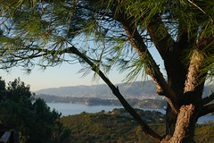 Francia - panorama da Cap Garonne (fotomie2009) Tags: france francia provence provenza scape cap garonne panorama paesaggio landscape sea mare tree coast