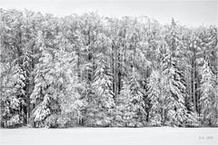White... (Ody on the mount) Tags: bäume em5ii mzuiko1250 omd olympus pflanzen schnee schneeschuhtour schwäbischealb wald winter bw monochrome sw trees woods metzingen badenwürttemberg deutschland de