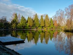 pond reflections (Rourkeor) Tags: eastrenfrewshire hdr mzuikodigitaled12‑100mm140ispro m43 omdem1markii olympus roukenglenpond scotland uk colourful mft microfourthirds pond reflections sunnyday trees winter