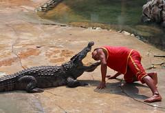 Bangkok, Thailand (explored) (Thomas Depenbusch (Depi)) Tags: asia asien thailand samut prakan crocodile farm bangkok thomas depenbusch gps canon eos 6d ef 20 100mm geotagged