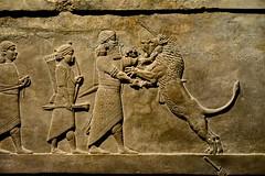 London 2018 – British Museum – Lion hunting (Michiel2005) Tags: ashurbanipal bm britishmuseum museum assyria relief reliëf lionhunting lion leeuw leeuwenjacht england engeland grootbrittannië greatbritain britain uk vk unitedkingdom verenigdkoninkrijk london londen