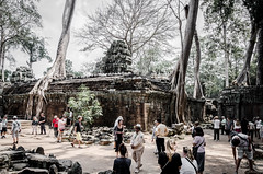 Building from the sky (Cédric Nitseg) Tags: nikon asie siemreap taprohm greelow travelling backpacking backpacker tree travel cambodge arbre voyage d7000 asia temple cambodia