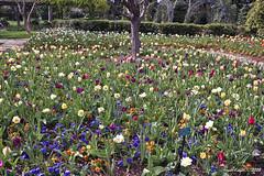 IMG_5633 (Roger Kiefer) Tags: dallas arboretum flowers outdoors beauty nature