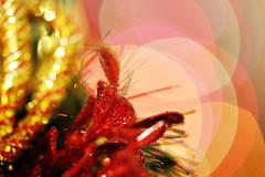 Holiday Bokeh (Christian Chene Tahiti) Tags: canon 6d paea tahiti christmas sapindenoël décoration bokeh sapin guirlande ornement brillant noël fête christmastree couleur colour jaune jauneor doré polynésiefrançaise frenchpolynesia polynésie closer closeup macro holidaybokeh macromondays