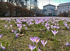 April (iharsten) Tags: spring april 2018 fredrikstad bibliotek library fredrikstadbbliotek fredrikstadlibrary norway
