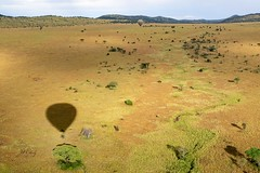 The Colors of The Serengeti Savanna (Jill Clardy) Tags: africa tanzania vantagetravel safari 201902239l8a0619 serengeti national park balloon dawn sunrise savanna plains grasses river green gold yellow hot air ride
