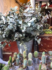 Gum leaves in a Cambridge market (birdsey7) Tags: cambridge leaves 2019pad