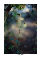 2019/3/9 - 10/21 photo by shin ikegami. - Lomography New Jupiter 3+ 1.5/50 L39/M (shin ikegami) Tags: sony ilce7m2 sonyilce7m2 a7ii 50mm lomography lomoartlens newjupiter3 tokyo sonycamera photo photographer 単焦点 iso800 ndfilter light shadow 自然 nature 玉ボケ bokeh depthoffield naturephotography art photography japan earth asia