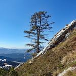 2019-03-29 03-31 Südtirol-Trentino 050 Caldonazzo-Lochere, Pizzo di Levico thumbnail