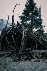 Something has to die... (Gavin Minera) Tags: nature tree dead living life winter cold wood sand national yosemite