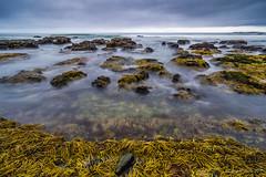 Yuraygir seascape (NettyA) Tags: 2016 australia diggerscamp nsw newsouthwales yuraygirnationalpark beach cloudy coastal longexposure rocks sea seaweed neptunesnecklace seascape