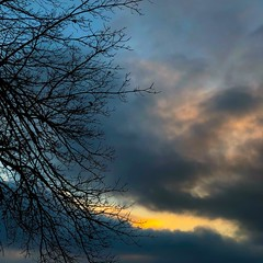 (tommyr68) Tags: oklahoma iphonography iphone yellow blue winter tree dusk clouds sunset sky