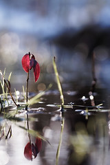 Premières feuilles du printemps dans la mare / First leaves of spring in the pond (Pascal Echevest   Nature) Tags: nikon5300 nature natura natur naturaleza natureza composition bokeh wild wildlife sauvage ambiance atmosphere macro macrophotographie macrophotography feuille leave mare pond printemps spring