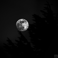 monochrome MOON (MAICN) Tags: square quadratisch nature vollmond day moon sw natur bw mond blackwhite monochrome schwarzweis einfarbig 2019 mono tag