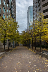 Slowly Changing Colour (Jocey K) Tags: sonydscrx100m6 triptocanada ontario canada autumn toronto city highrise clouds sky buildings architecture birds pigeons leaves trees autumncolours