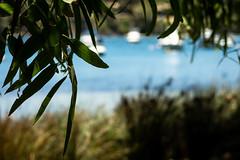 Swan River (.Stephen..Brennan.) Tags: bicton boats da70 foliage pentax pentaxk3 swanriver trees waterscape perth westernaustralia australia au 70mm