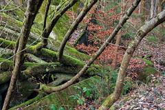(franconiangirl) Tags: wehrmacht schiesplatz shootingrange militarycamp militarydecay militär verlassen abandoned ruin ruine ruins abandoneé trees overgrown bäume ehemalig moos moss wald forest woods ue urbex