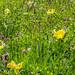 Flowers at Arundel Castle