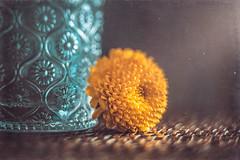 A yellow flower (Ro Cafe) Tags: ddproject52 lensbaby lensbabyedge80 patterns sonya7iii glass macroconverter yellowflower week12 textured naturallight dark