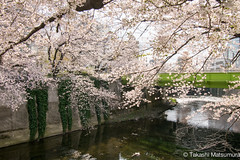 Kanda River (takashi_matsumura) Tags: kanda river takadobashi bridge takada shinjukuku tokyo japan ngc nikon d5300 桜 高戸橋 新宿区 東京 cherry blossoms afp dx nikkor 1020mm f4556g vr