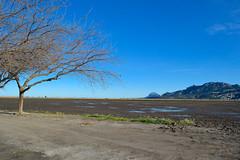 Marjal de Pego 06 (dorieo21) Tags: pego montgó marsh marjal tree árbol