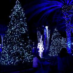 Christmas Tree (earthdog) Tags: 2018 needstags needstitle nikon d5600 nikond5600 18300mmf3563 greatamerica santaclara amusementpark themepark christmas winterfest gawinterfest tree light lowlight christmastree night