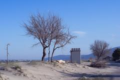 Winter Topography (Celtis Australis) Tags: pentaxk3 smctakumar50mmf14 seaside sand baretrees bluesky winter pentaxart