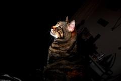 Noir et lumière (rolyams) Tags: black white color light cat portrait chat artistique pose