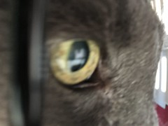 Bonkers on the Occasion of his 19 1/2th Birthday (sjrankin) Tags: 15march2019 edited animal cat closeup kitahiroshima hokkaido japan bonkers birthday 1912 vetclinic vet clinic cage carrier catcage blurry