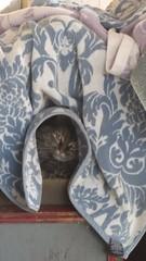 Fuzzy's House (Adventurer Dustin Holmes) Tags: 2019 cat feline animal mammal domesticcat domesticatedcat alleycat straycat outdoor lebanonmo lebanonmissouri lacledecounty