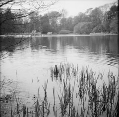 Who Said DUCK.... (Phil John (Swansea)) Tags: zeissikon nettar 6x6 fomapan100 ilfosol3 homedeveloped swansea swanseabay brynmillpark filmisnotdead