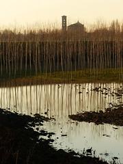 ... (claudiomantova1) Tags: luce ombra sole sun alberi atmosfera argine fiume riflessi