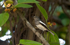 110488664 (TARIQ HAMEED SULEMANI) Tags: sulemani tariq tourism trekking tariqhameedsulemani winter wildlife wild birds nature nikon