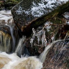 EisBach (Panasonikon) Tags: panasonikon lumixdmcg81 gvario45175 quadrat square bach wasser water river eis ice zweig harz winter