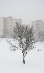019Jan 08: Lonely Tree in Winter Park (Johan Pipet 2M+ views) Tags: flickr strom tree winter zima snow sneh suburb urban city bratislava dubravka dúbravka blizzard fujavica slovakia slovensko eu europe palo bartos bartoš canon g7x park