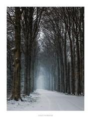 Lage Vuursche (http://www.paradoxdesign.nl) Tags: lage vuursche holland nederland netherlands dutch winter snow laan road zwarteweg utrecht gooi en vechtstreek eemland soest baarn 2019