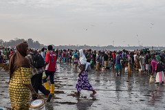 Gambia  fish market (larslaguna) Tags: fishmarket fiskemarknad market mat afrika fish africa gambia marknad fiske fisk