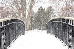 Over the Bridge (Karen_Chappell) Tags: bridge snow white black railing rail curve nature outdoors nfld newfoundland park bowringpark stjohns canada atlanticcanada avalonpeninsula eastcoast weather snowing snowy storm trees winter january cold stormy canonef24105mmf4lisusm