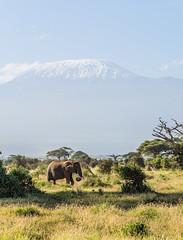 Elephants (Prashanth S) Tags: safari africansafari africa kenya parks wild wildlife safariphotography travel amboseli ambo nature natural herd elephants animals animal