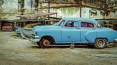 Old Cars and a Mangy Guard Dog (Mike Schaffner) Tags: autos cars chevrolet chevy cuba dog guard old lahabanavieja havana cu